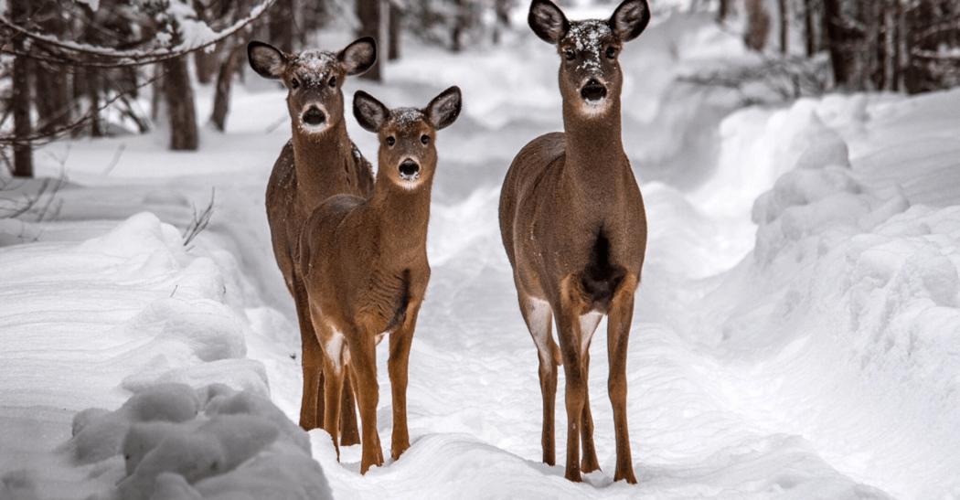 Deer Country Adventure